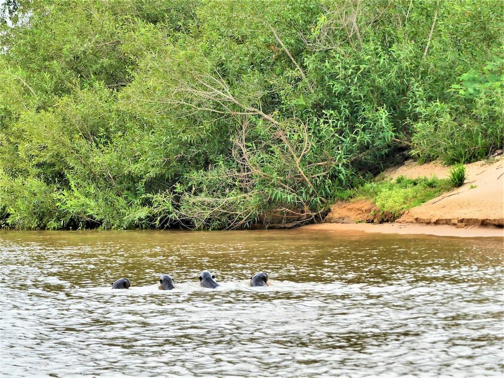 pantanal beste reistijd brazilie