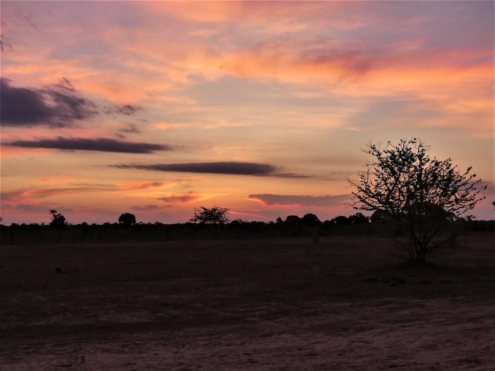 pantanal bezienswaardigheden brazilie