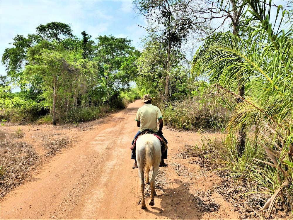 pantanal paardrijden in brazilie