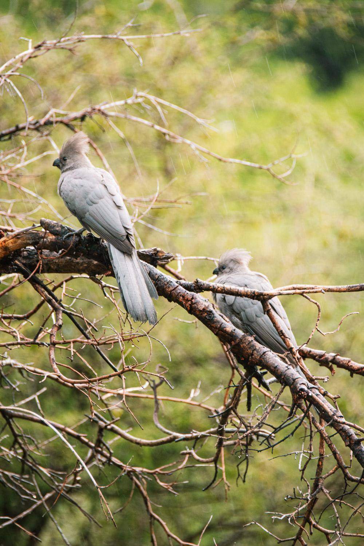 pilanesberg go away bird