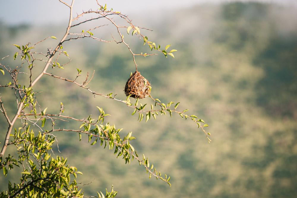 pilanesberg national park vogelnestje