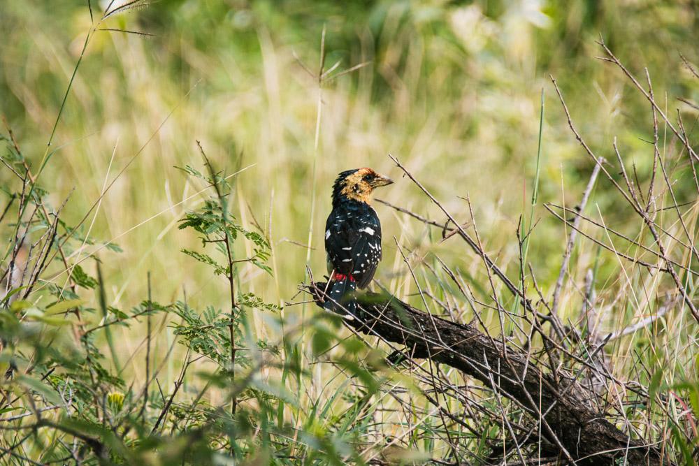 pilanesberg national park vogels birdwatching