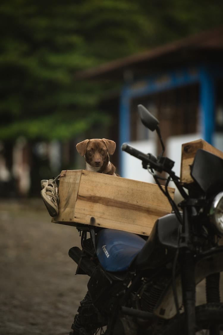 puppy jungle peru