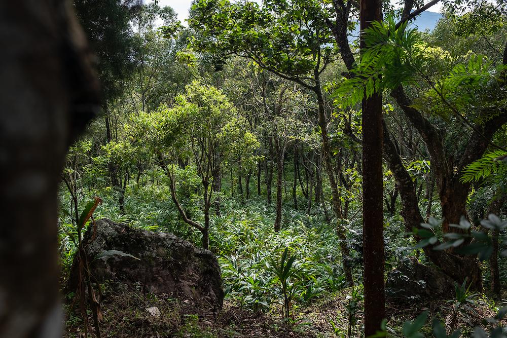 regenwoud in munnar india