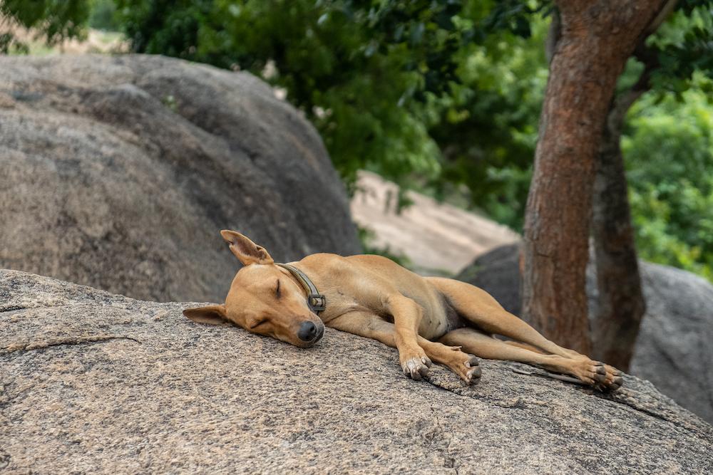 reisadvies india dieren veiligheid