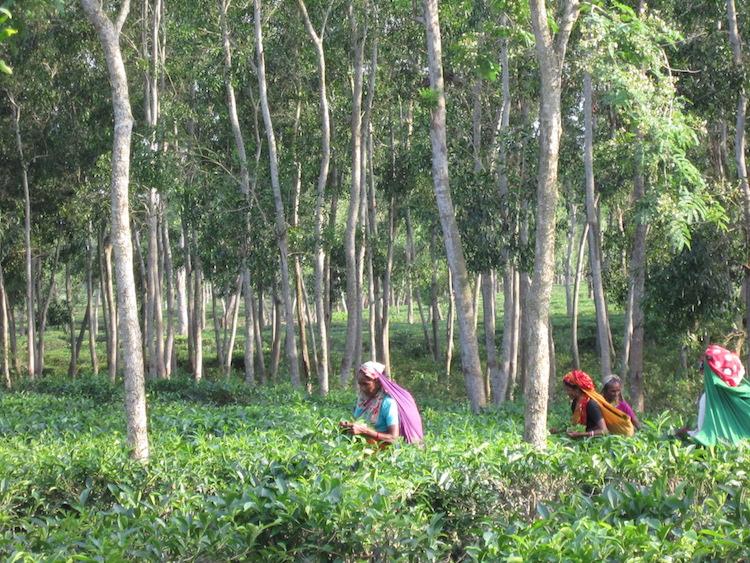 reizen bangladesh