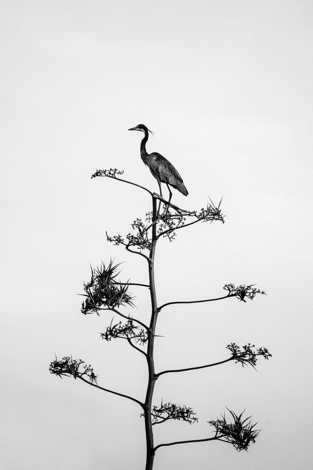 reizen naar rwanda vogels
