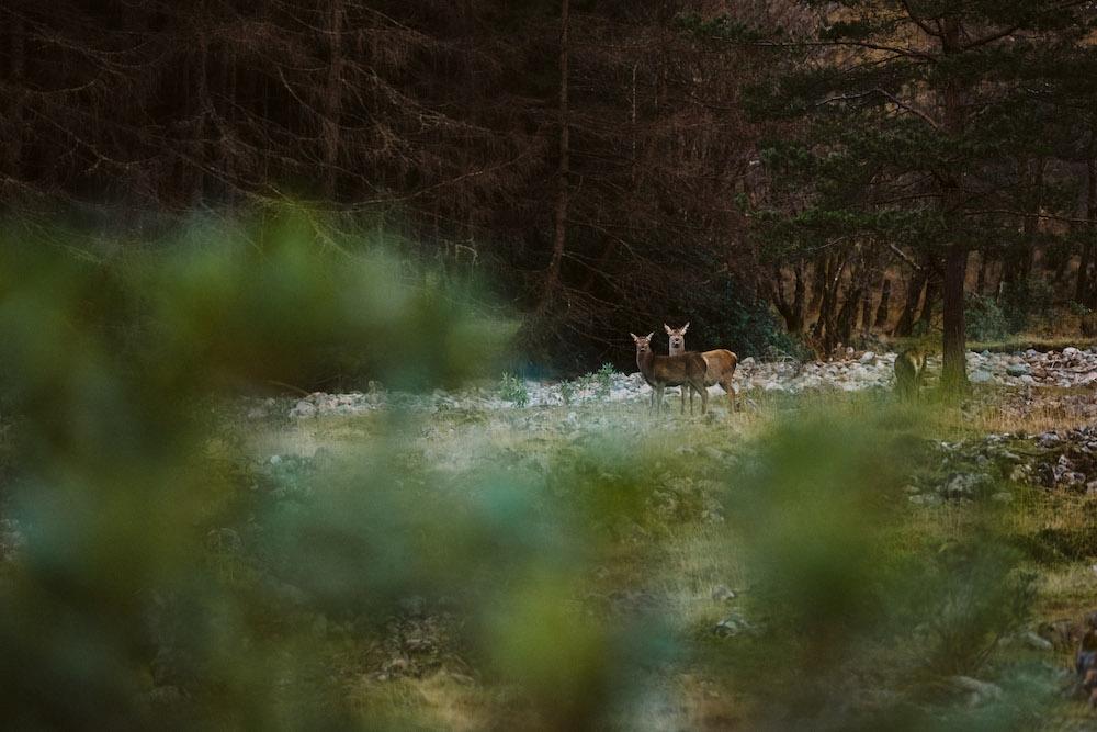 roadtrip schotland wildlife