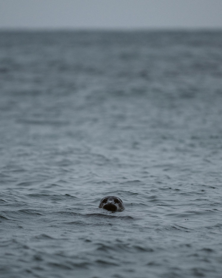 roadtrip schotland zeehond in zee