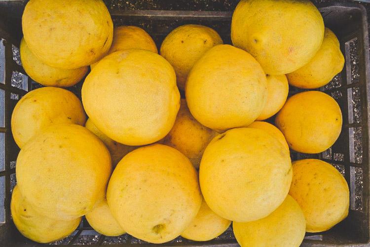 rondreis amalfikust enorme citroenen Sorrento