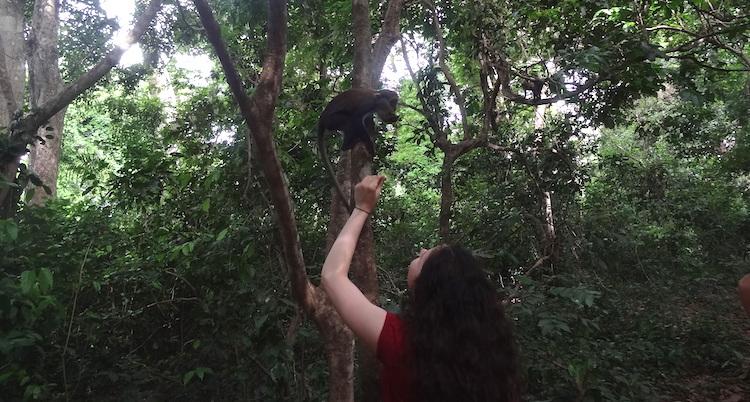 rondreis ghana apen