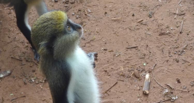 rondreis ghana dieren