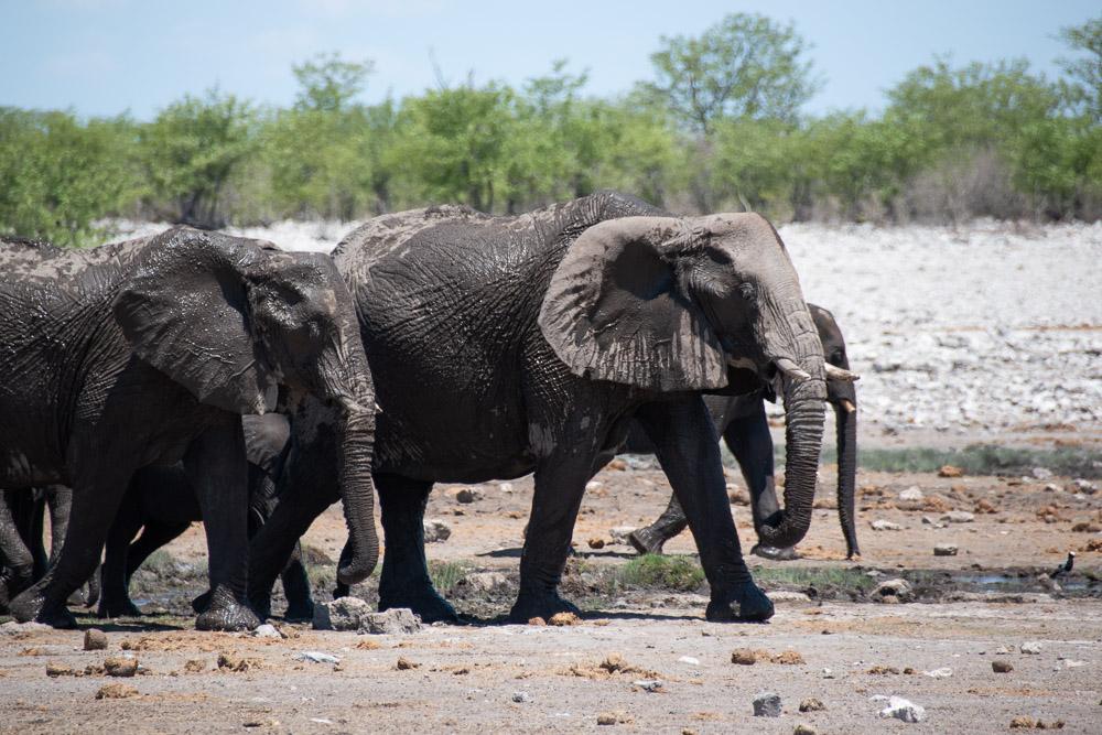 rondreis namibie Etosha