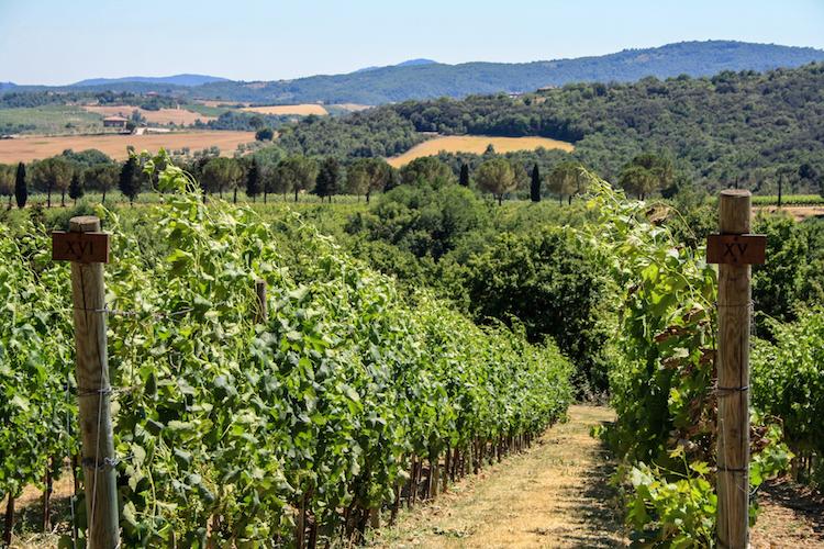 rondreis umbrie tips 1 winery B