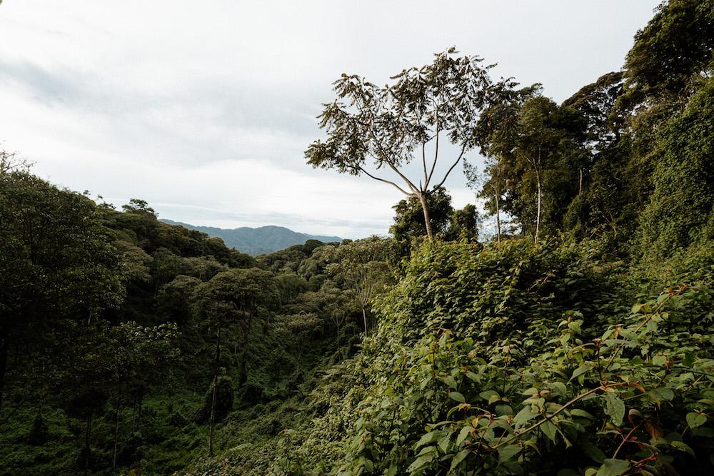 rwanda Nyungwe