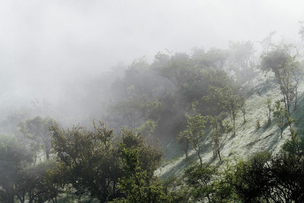 rwanda jungle mistig