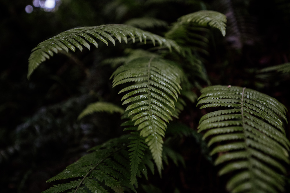 rwanda natuur