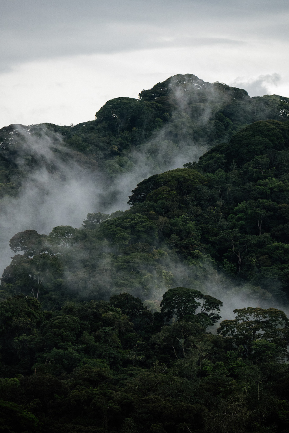 rwanda vakantie jungle