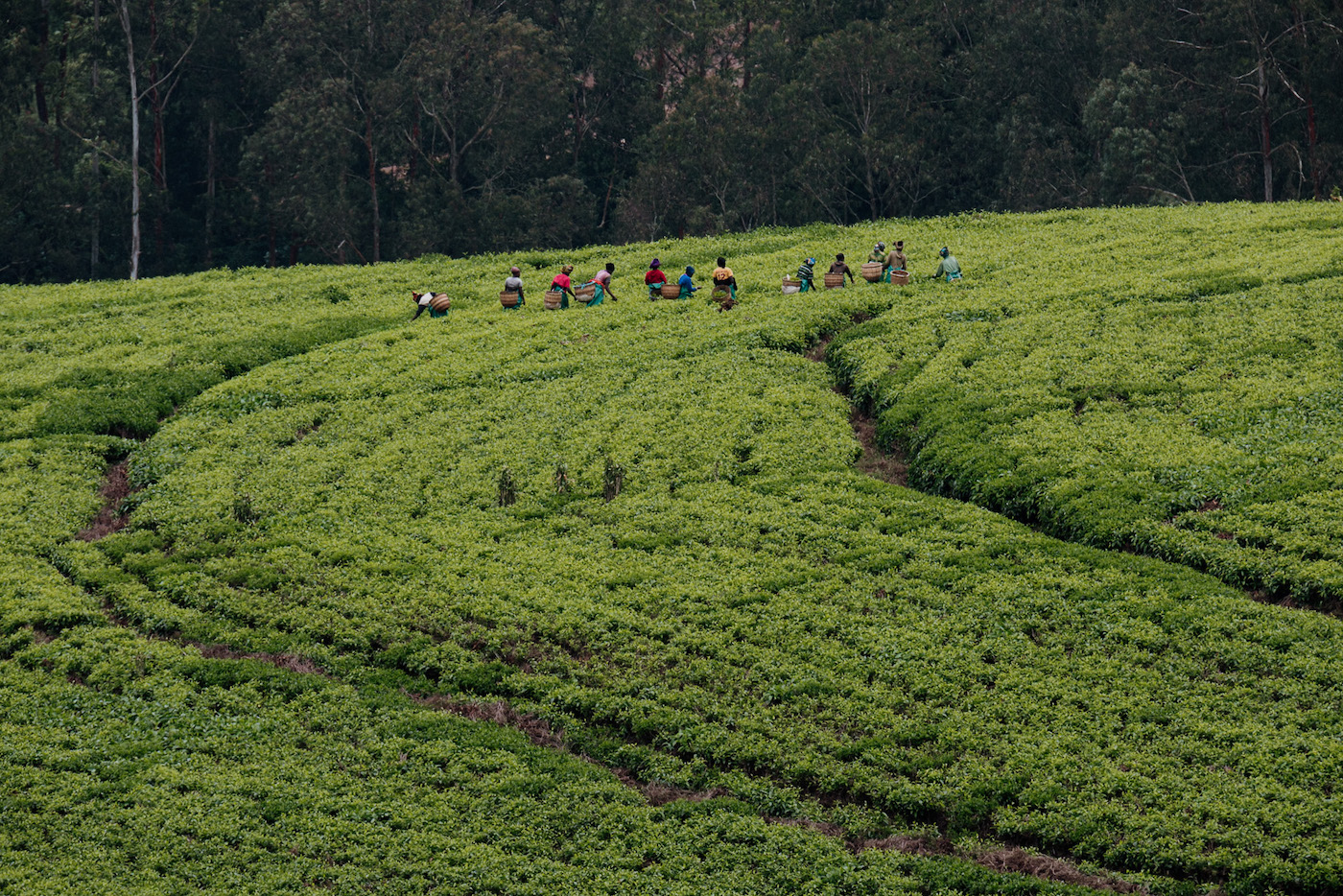 rwanda vakantie plantage