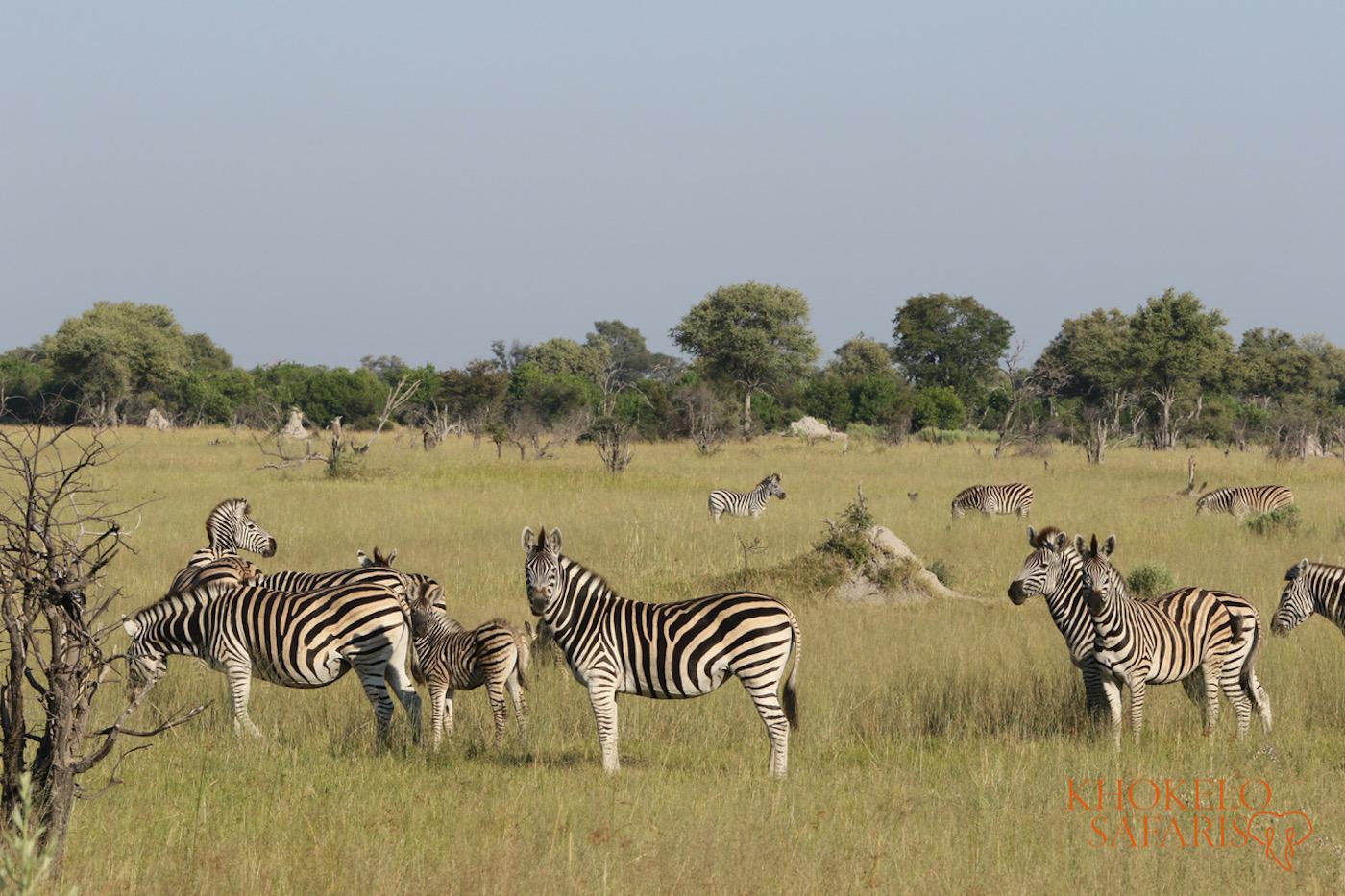safari in Botswana self drive