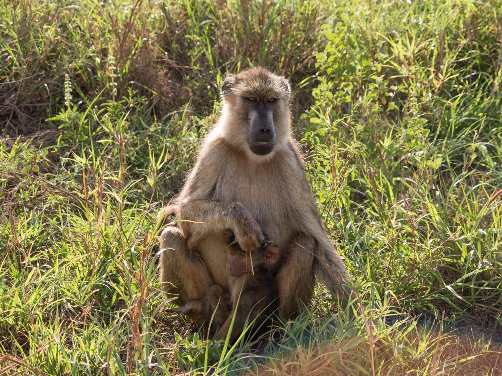 safari-kenia-bamboom