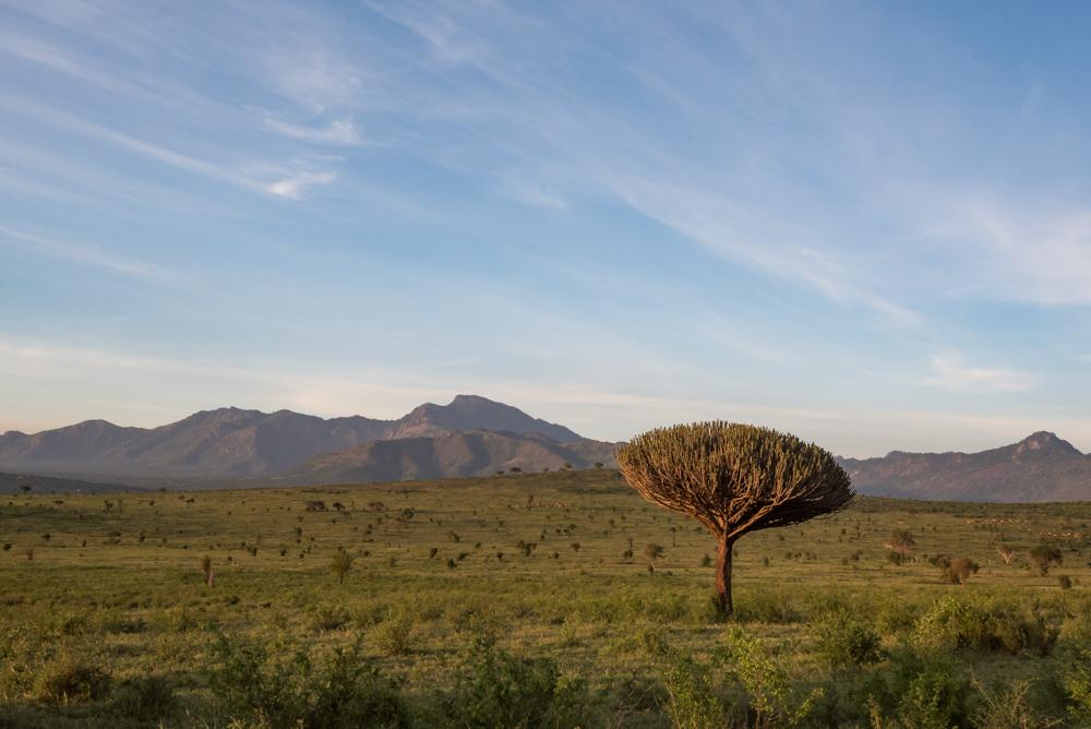 safari kenia salt lick lodge zonsondergang