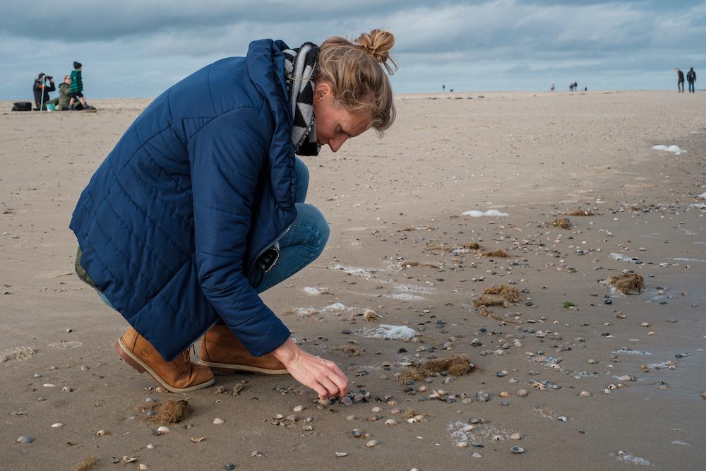 schelpen zoeken strand texel