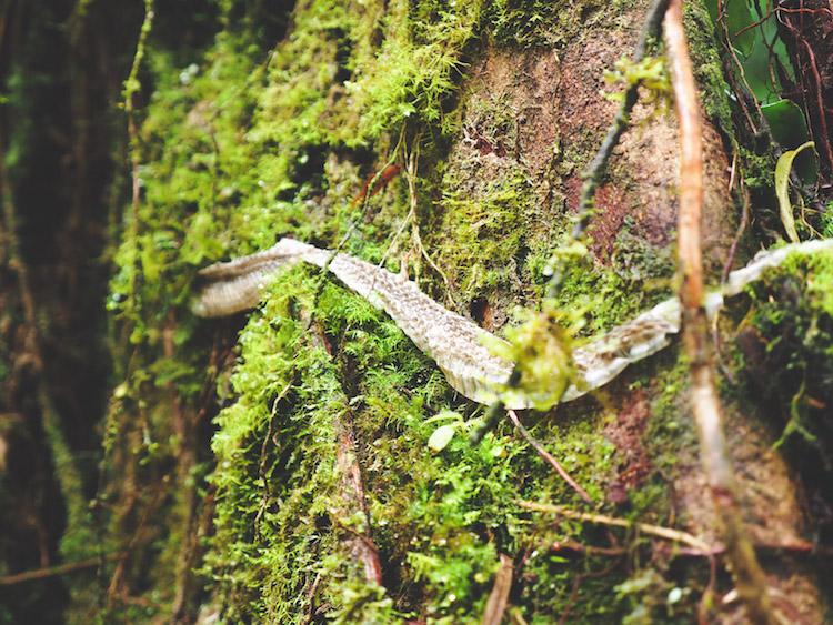 slangenhuid Catarata del Toro costa rica