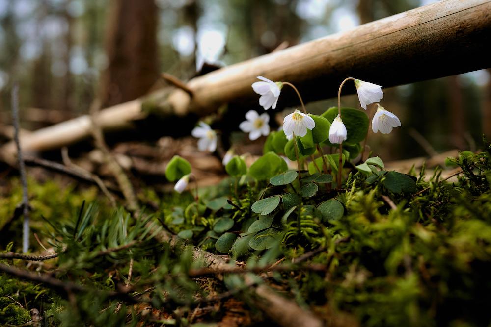 speulderbos natuurfotografie workshop