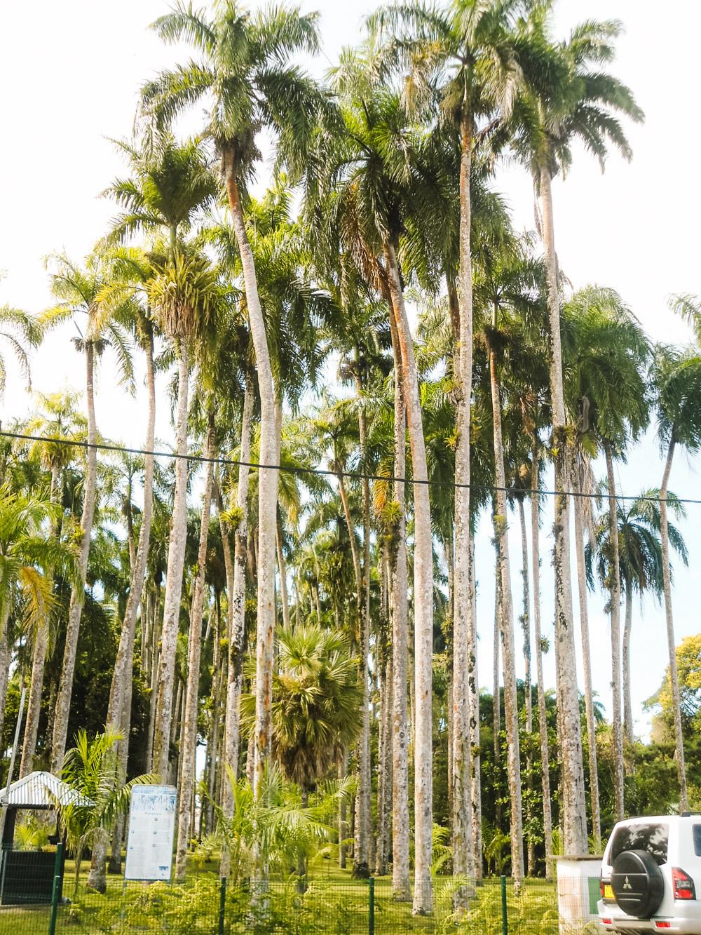 suriname vakantie tips palmentuin paramaribo