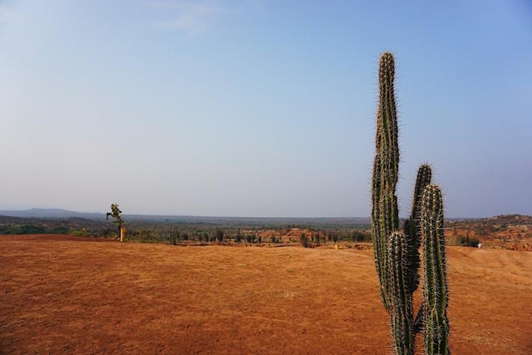 tatacoa cactussen colombia