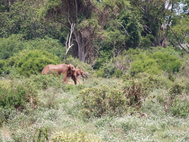 tenBoma olifanten in kenia