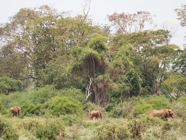 tenBoma olifanten kenia