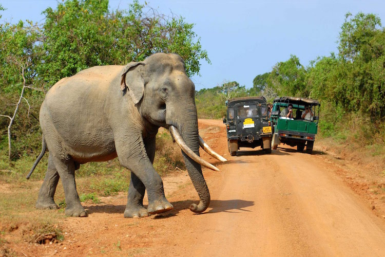 the tuk tuk trip sri lanka yala national park