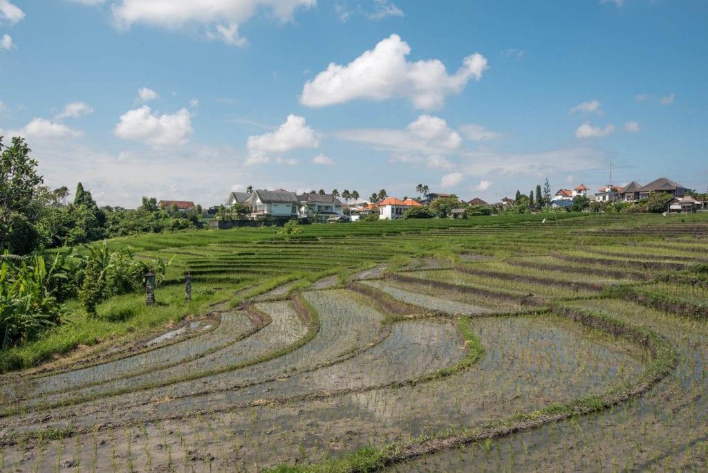 tips canggu bali rijstvelden