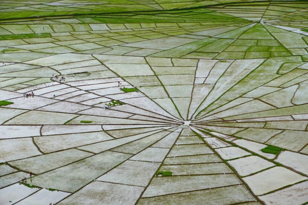 tips flores indonesie rice fields