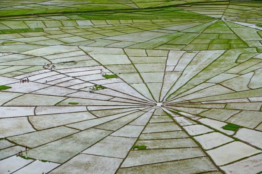 tips flores indonesie rice fields