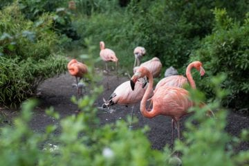 tips ostrava tsjechie flamingo
