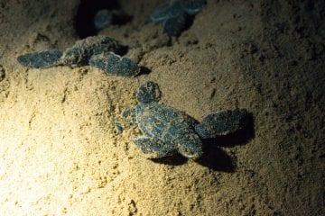 turtle tour zuid afrika baby schildpadden