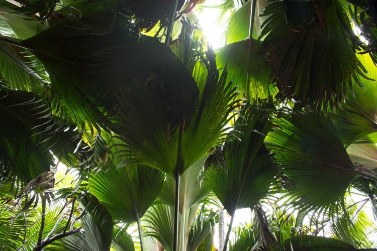 vallee de Mai dak van de jungle praslin seychellen