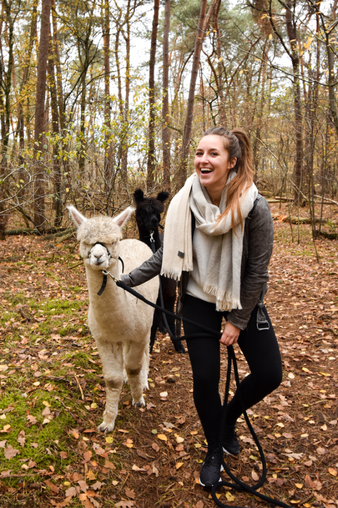 verrassingsreis nederland alpaca wandeling