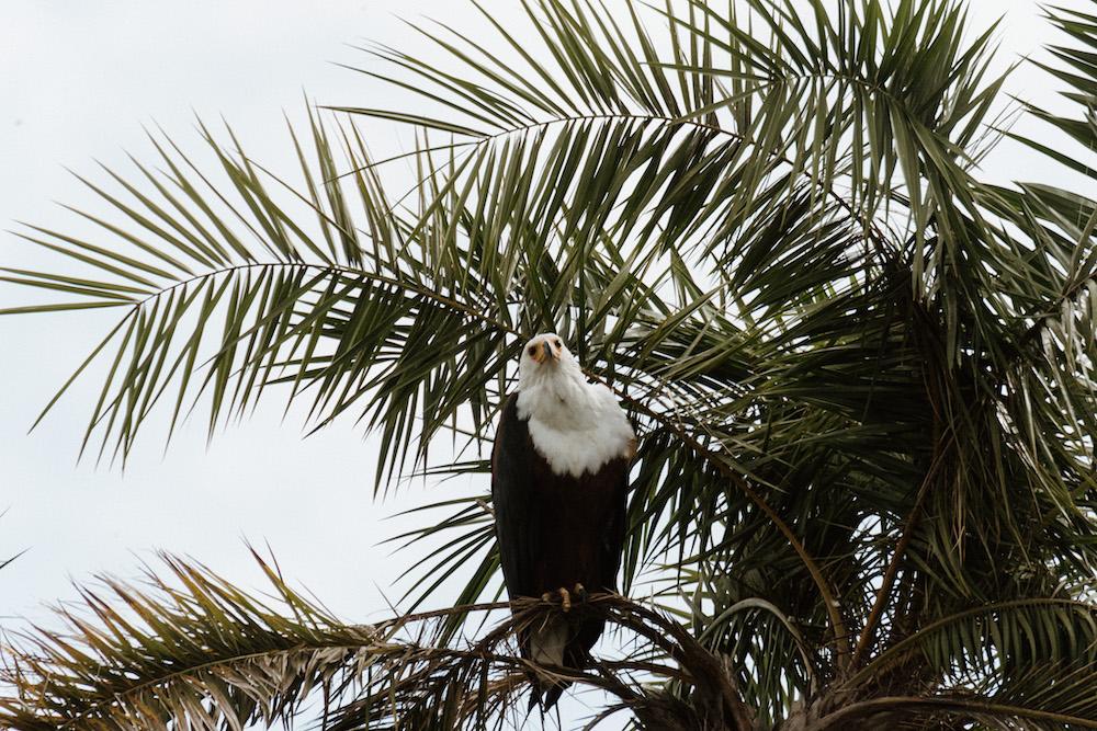vogels in rwanda reizen