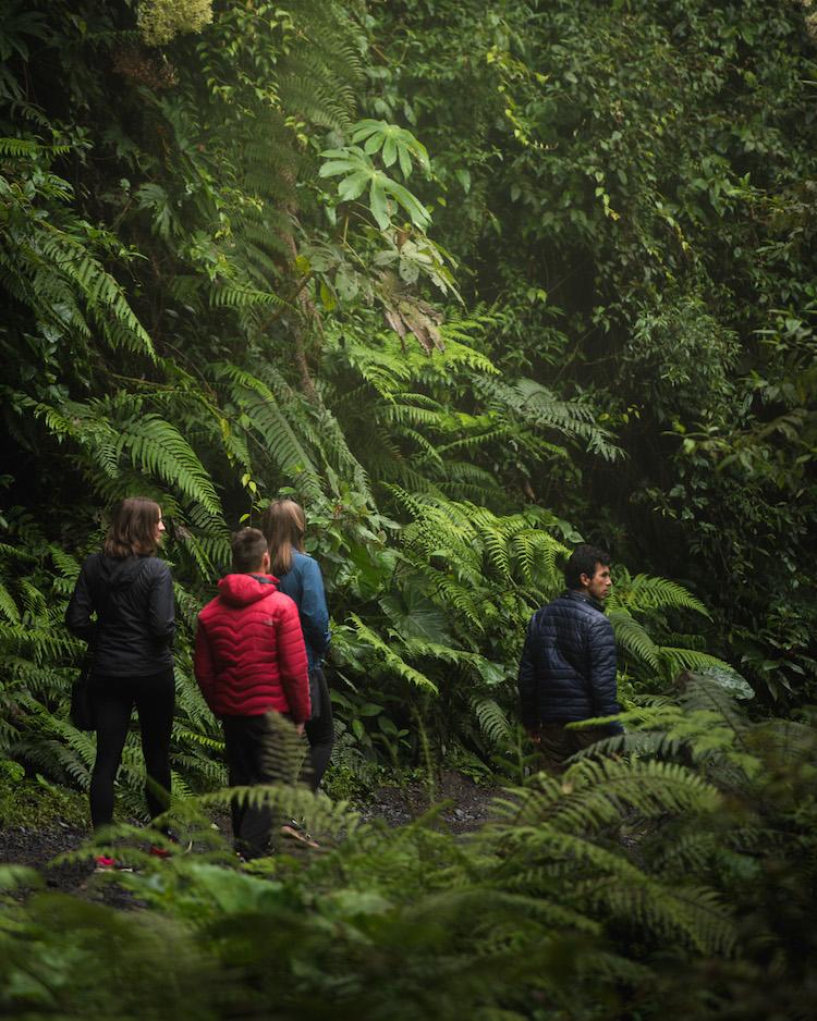 wandeling door manu jungle in peru
