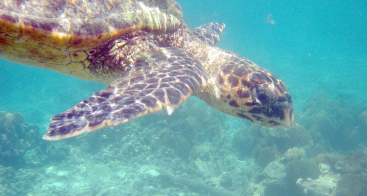 wat te doen in Madagascar-schildpad-sawadee
