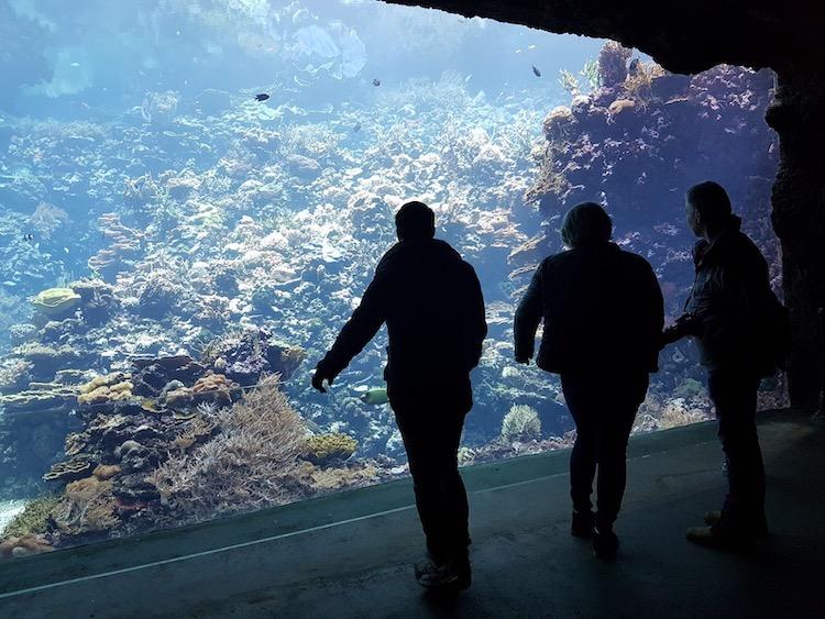 wat te doen in arnhem Burgers Zoo
