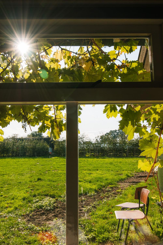 wat te doen in de Achterhoek wijngaard bezoeken