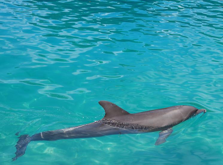 wat te doen in miami onderwater wereld
