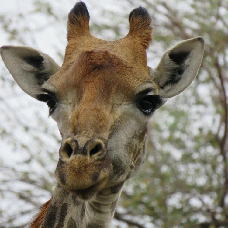 wat te doen in nairobi kenia Giraffe Centre