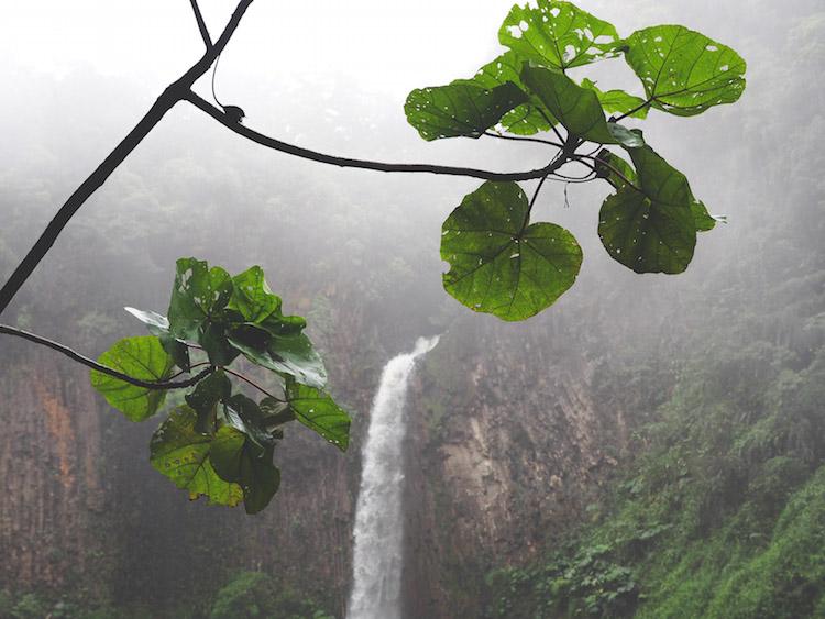 waterval planten Catarata del Toro costa rica