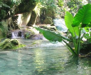 watervallen jamaica reach falls plants